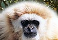 Albufeira Car Hire offer you free tickets to Lagos Zoo - Book Now